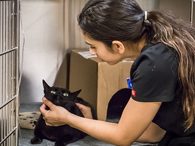 Cat Friendly Practice in Sonora: Tech Lifts Cat's Chin